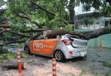 Uber car biến dạng dưới thân cây cổ thụ, nữ hành khách nhập viện