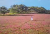 Hòa mình vào Thảo nguyên cỏ hồng Đà Lạt