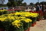 Người dân Đà Lạt nhộn nhịp sắm hoa chơi Tết