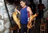 Hơn 11 triệu chữ ký phản đối lễ hội thịt chó ở Trung Quốc