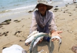 Truyền thông thế giới đồng loạt đưa tin về thủ phạm gây ra vụ cá chết hàng loạt ở Việt Nam