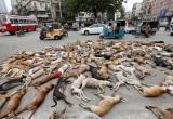 Phẫn nộ cảnh 700 chú chó hoang bị đầu độc chết ở Pakistan