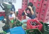 Phá đường dây làm giả hàng ngàn chai bia Sài Gòn ở Long An