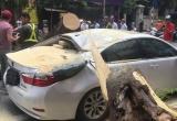 Cây lớn bất ngờ gãy đổ đè bẹp xế hộp Lexus