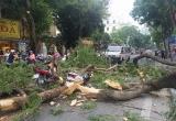 Hà Nội: Cây lớn bất ngờ gãy đổ khiến nhiều người bị thương