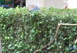 Bé trai tử vong do ngã từ độ cao 2m tại Bệnh viện đa khoa Bình Dương