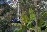 Yêu cầu Sở Y tế Tuyên Quang xác minh việc đốt rác thải y tế giữa lòng thành phố