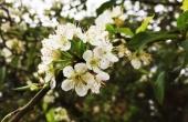 Xuân đang về trên đỉnh Hương Tích