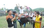 Phú Thọ: Hội chọi trâu Phù Ninh không được bán vé, thu tiền