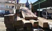 Quảng Nam: Bắt giữ số lượng lớn gỗ lậu trên sông Thu Bồn