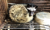 Gia Lai: Kiểm soát chặt chẽ việc buôn bán, tiêu thụ động vật hoang dã nguy cấp