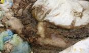 Hà Nam: Báo động tình trạng tẩu tán lợn chết ra môi trường