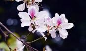 Lên Điện Biên đắm mình cùng điệu múa, tiếng khèn trong Lễ hội hoa Ban