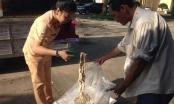 Thanh Hóa: Bắt giữ 1,6 tấn nội tạng động vật hôi thối
