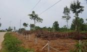 Loạn đất trên đảo Phú Quốc: 'Xã hội đen' lộng hành?