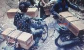 """Tận diệt rừng đầu nguồn ở Yên Bái: """"Lâm tặc"""" đốn gỗ Pơ mu nhộn nhịp như...đi chợ"""