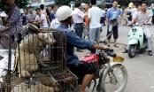 Chàng trai Anh thu thập 23.000 chữ ký phản đối lễ hội thịt chó Trung Quốc