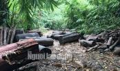 Phó Thủ tướng chỉ đạo điều tra làm rõ vụ phá rừng ở Lâm Đồng