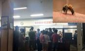 Hà Nội: Hơn 50 học sinh bị ong đốt phải nhập viện