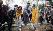 Quảng Ninh: Ươm 999 cây mai vàng nơi Đất thiêng Yên Tử