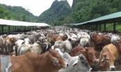 Đồng hành cùng Thực phẩm sạch: Từ trang trại đến bàn ăn