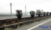 Quốc lộ 18 nhiều km cây xanh bị cháy trụi: Do những người đi bắt chuột ?