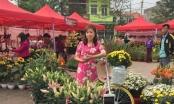 Quảng Ninh: Tưng bừng Hội hoa xuân Hoành Bồ 2017