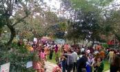 Trực tuyến: Lễ khai mạc kết thúc, du khách bắt đầu được vào thăm vườn hồng