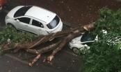 Hà Nội: Mưa lớn, cây đổ đè bẹp ô tô trên đường Phan Huy Chú