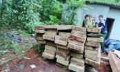 Hà Giang: Cần làm rõ hành vi khai thác gỗ nghiến trái phép của trưởng thôn Tân Sơn