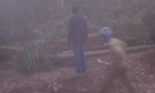 Đồng Nai: Ngang nhiên đốn hạ hơn 10ha tràm trong đêm