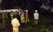 Hà Nội: Cành cây cổ thụ gãy rơi xuống đường làm 3 người bị thương sau cơn mưa lớn