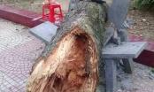 Hải Dương: Cành cây rơi vào người làm Phó hiệu trưởng tử vong tại chỗ