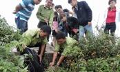 Đà Nẵng: Hai kẻ lạ mặt đến nhà riêng uy hiếp gia đình kiểm lâm viên