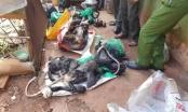 Lâm Đồng: Quán nhậu nghi tàng trữ số lượng lớn cá thể động vật hoang dã