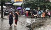 Đà Nẵng: Người dân hốt hoảng khi thấy cá sấu còn sống bán... giữa chợ