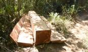 Kon Tum-Gia Lai: Ngang nhiên phá rừng vào những ngày cuối năm