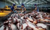 Audio Tài chính Plus: Vượt EU, ASEAN trở thành thị trường lớn thứ 3 của cá tra Việt
