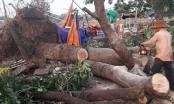 Đắk Lắk: Một người thiệt mạng sau trận mưa lớn