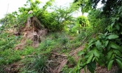 TP HCM: Di tích khảo cổ cấp quốc gia có nguy cơ 'biến mất'