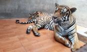 Lâm Đồng: Làm rõ việc du khách nước ngoài tố Khu du lịch thác Prenn ngược đãi thú hoang dã