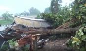 TP HCM: Mưa giông khiến nhiều nhà dân tốc mái, cây xanh ngã đổ