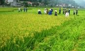 Chuyển mục đích sử dụng đất 2 tỉnh Bắc Giang và Bắc Ninh