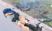 Trộm chó bất thành, đối tượng bị trai làng đánh tử vong