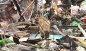 Bình Dương: Cháy ki ốt, 1 người tử vong