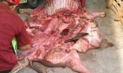 Dịch tai xanh bùng phát, chuyên gia cảnh báo tuyệt đối không xẻ thịt, ăn thịt lợn bệnh