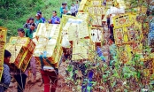 Thiên đường hàng lậu Tân Thanh: Những đồng tiền có vị mặn chát