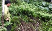 Hà Giang: Thả 2 cá thể Trăn gấm về rừng tự nhiên