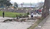 Xác định danh tính nạn nhân bị cành cây rơi trúng đầu tử vong