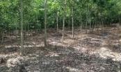 Khởi tố 4 cán bộ ở Đắk Nông liên quan cấp sổ đỏ cho vợ Phó Giám đốc Sở KH&CN